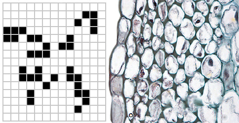 Conway's Game of Life is a simple rule based system, quite in contrast to God's Game of Life